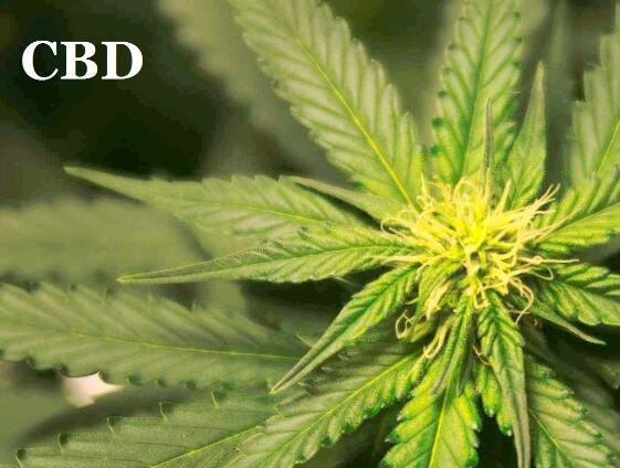 Can Vaping CBD Cause a Failed Drug Test or Get You High?